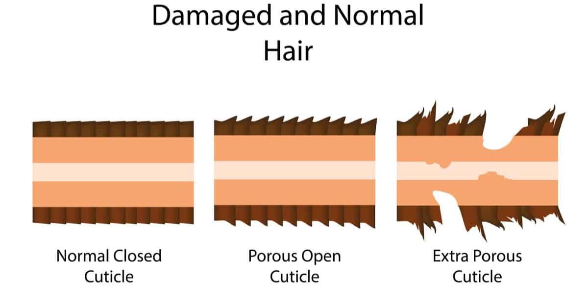 cartoon cross-section of three hairs