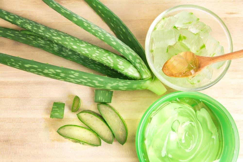 aloe vera plant and gel
