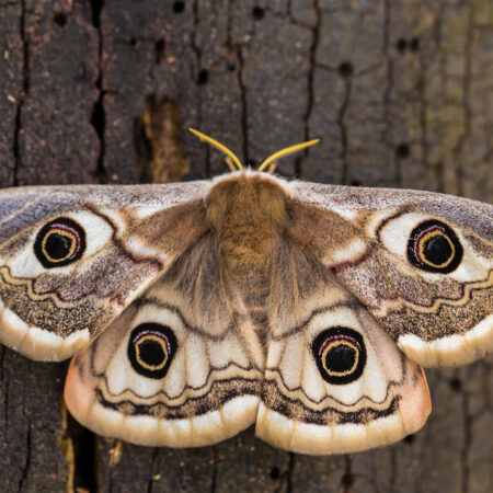 The Many Meanings of Moth Tattoos