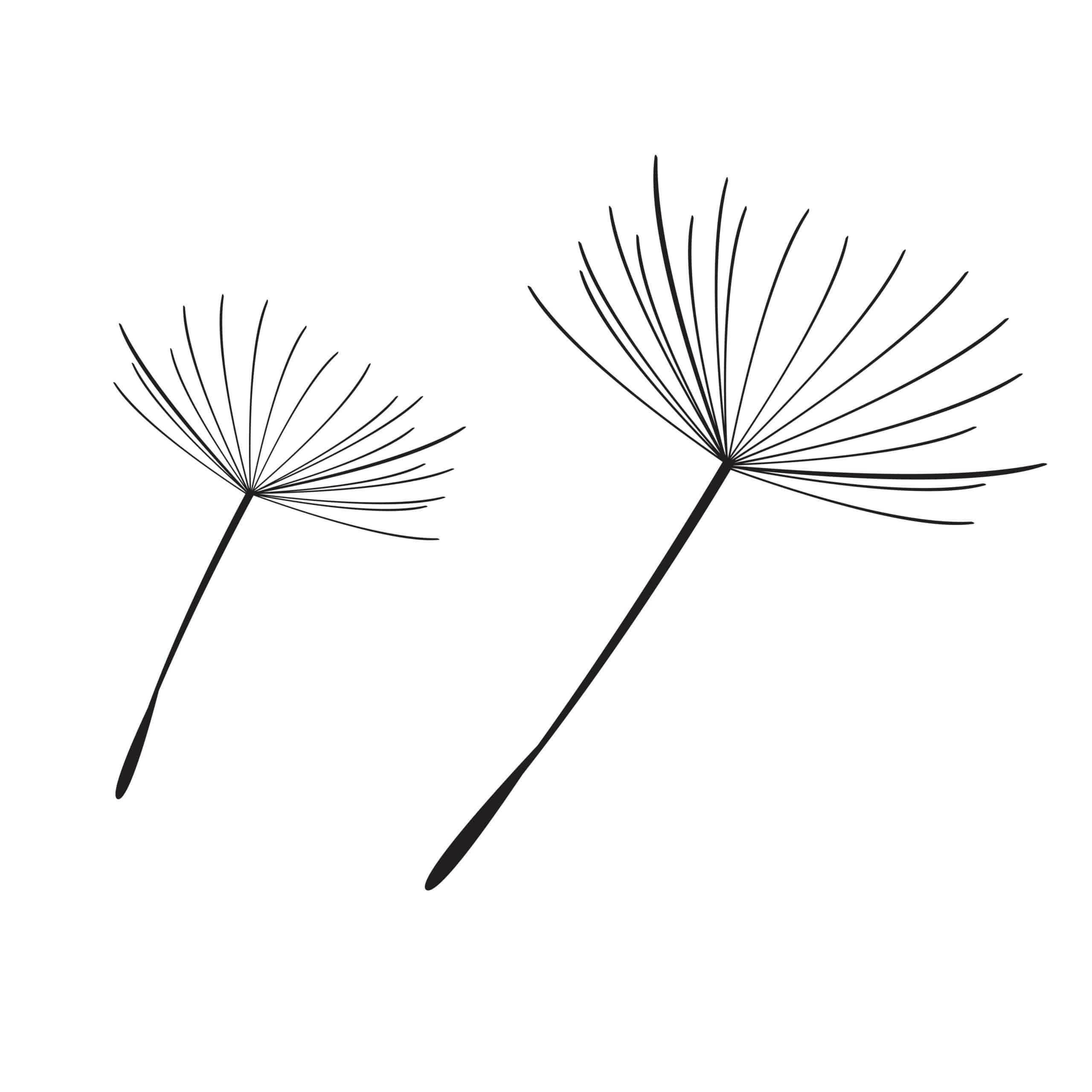 bare dandelion silhouette drawing