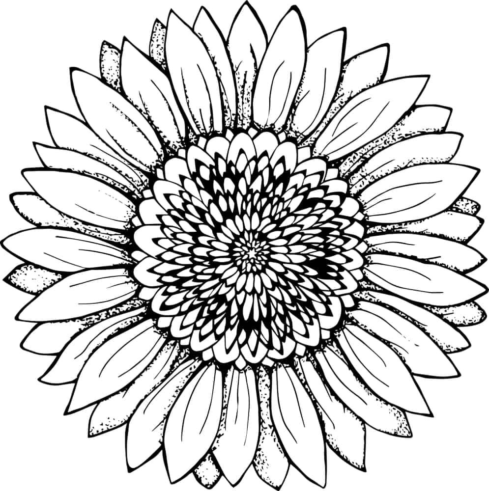 black and white sunflower tattoo illustration