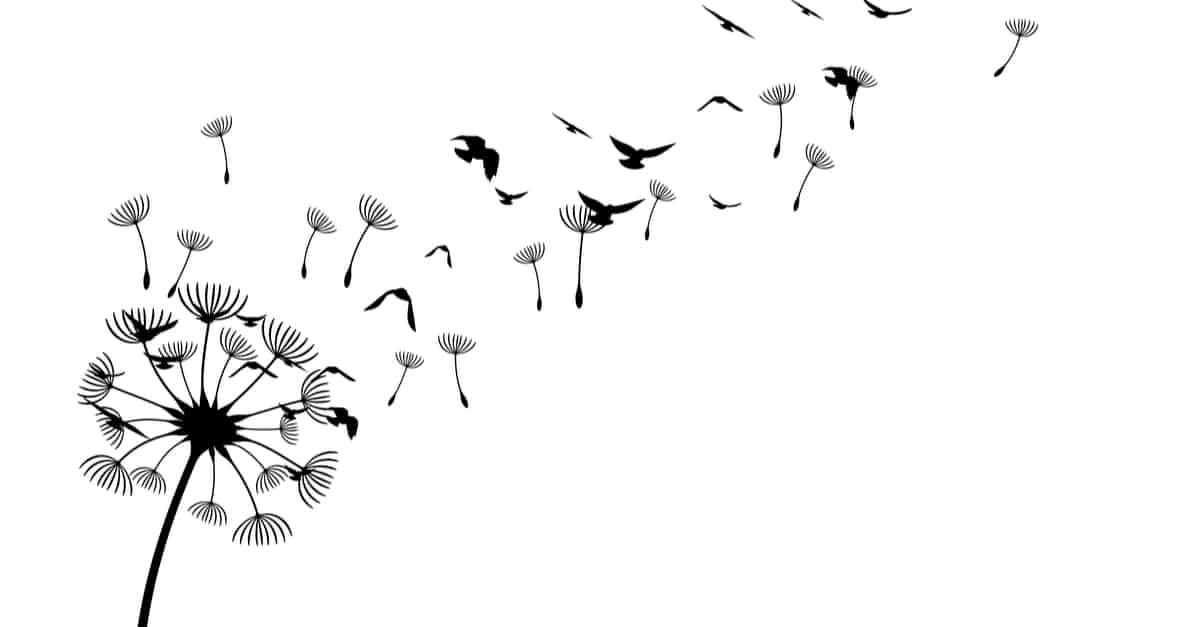 dandelion and birds tattoo sketch