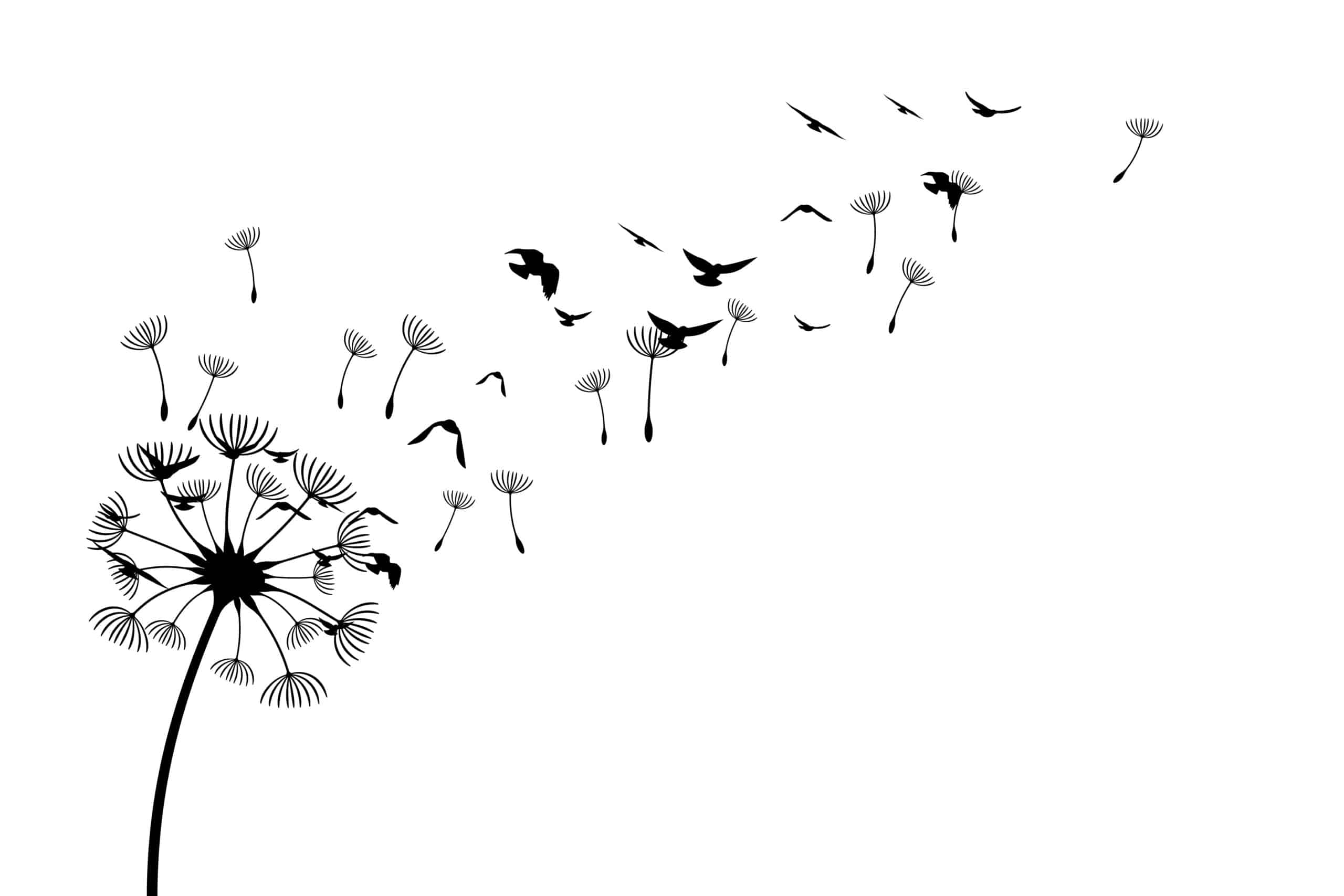 dandelion seeds with birds drawing