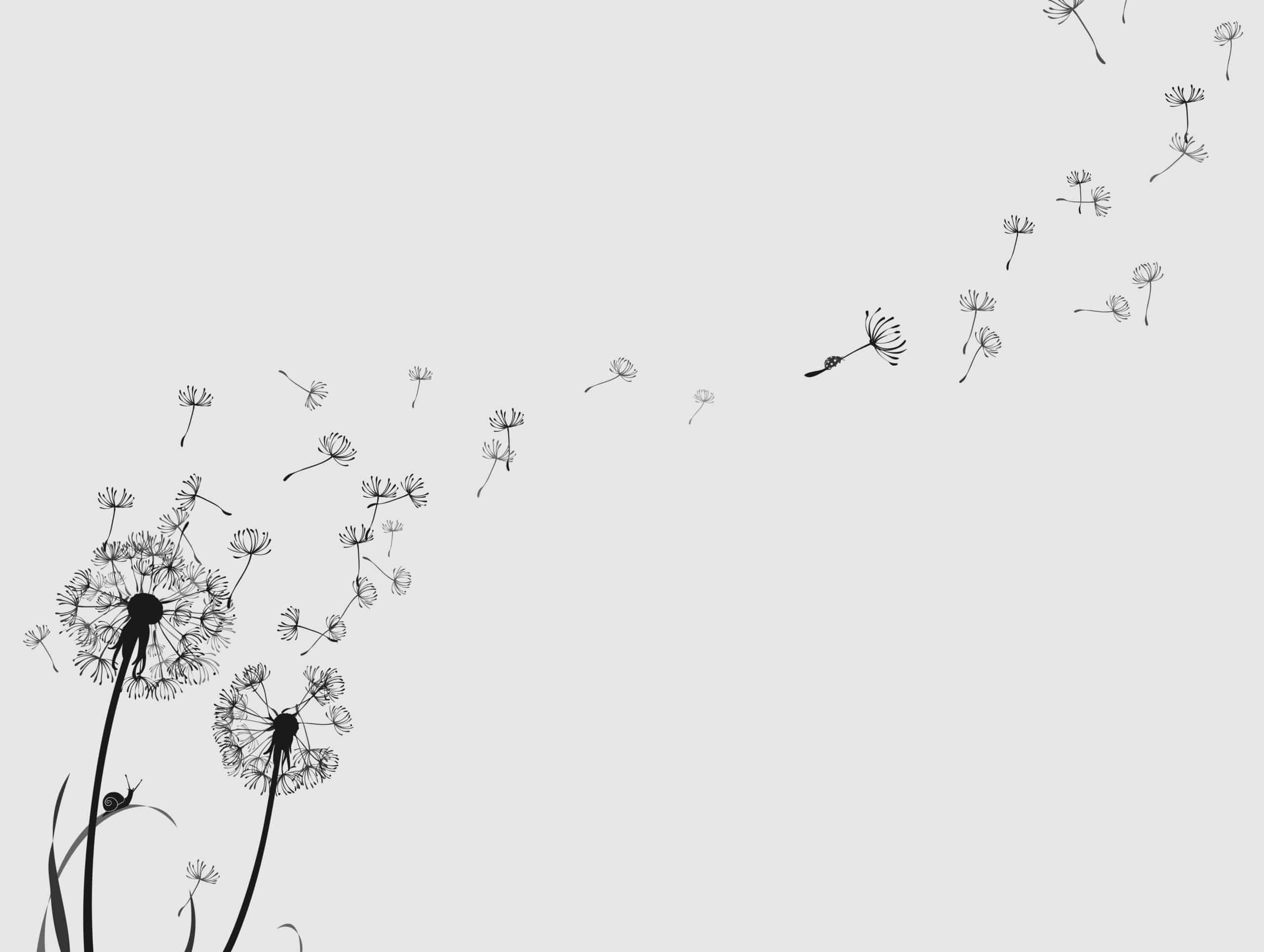 dandelion with seeds blowing drawing