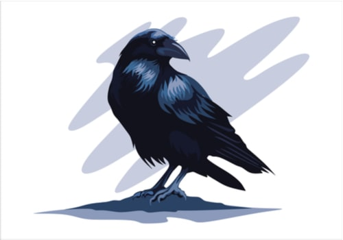 raven tattoo sketch