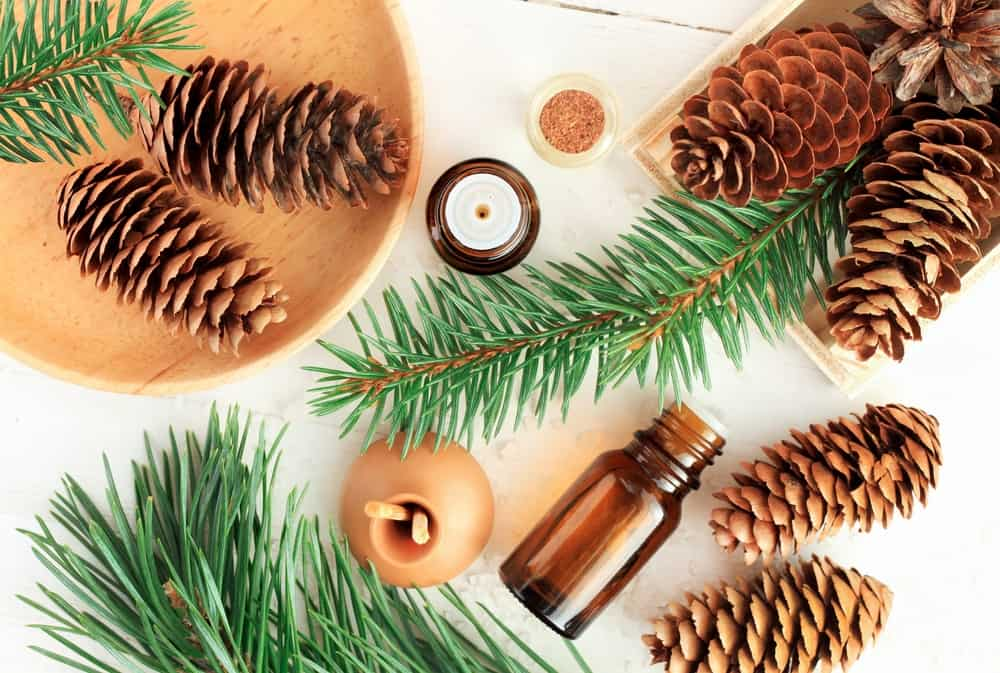 essential oils with pinecones and branches