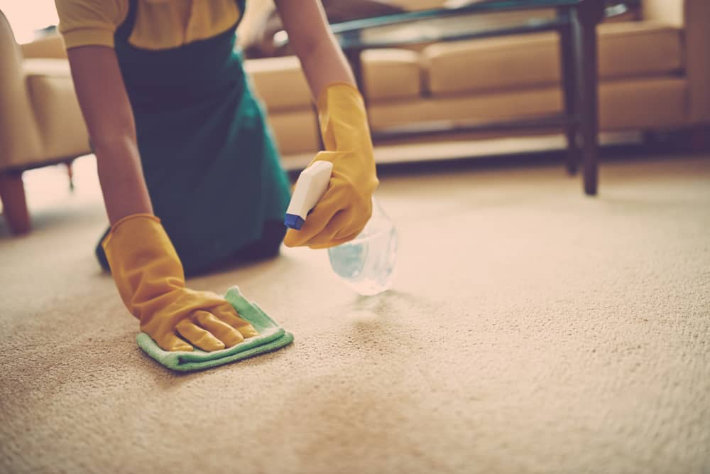 person removing carpet stain